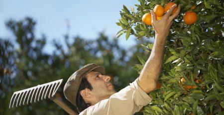 Фермерство в Испании