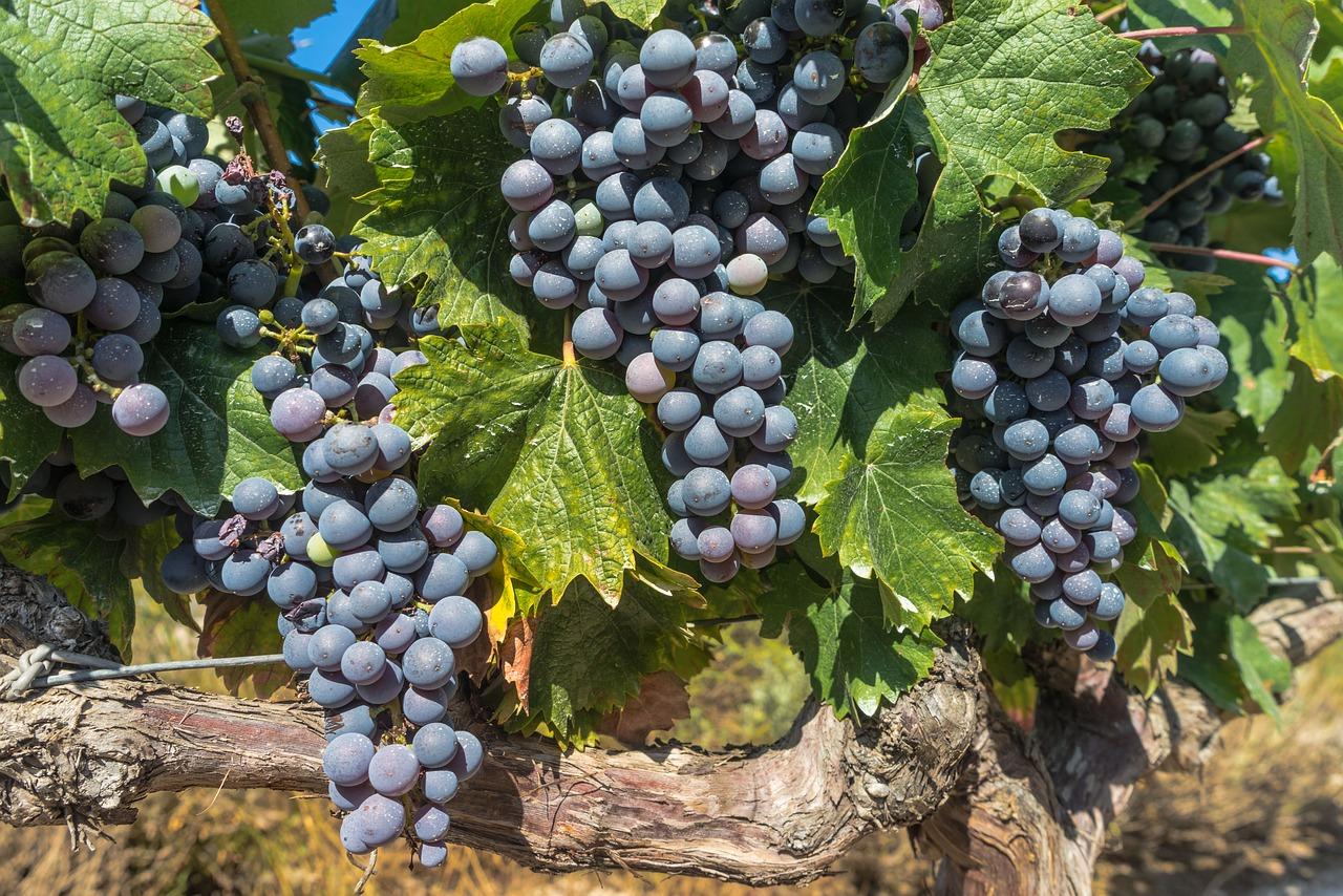 Регион виноделия Риоха